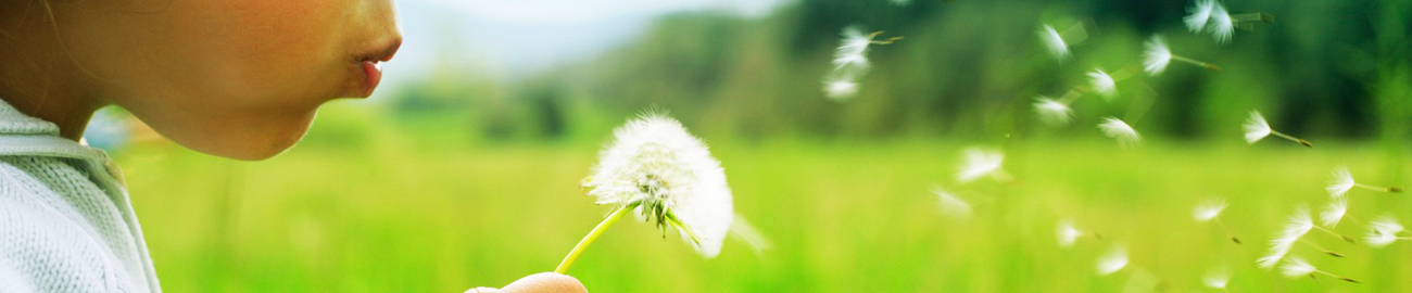 Child blowing dandelion seeds in a field of green